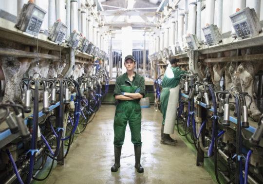 Frau im Kuhstall einer modernen Landwirtschaft